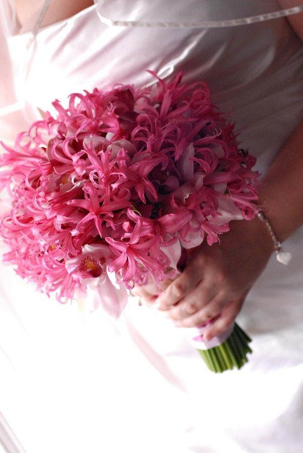 31 best Nerine Lily images on Pinterest | Wedding bouquets, Bridal ...