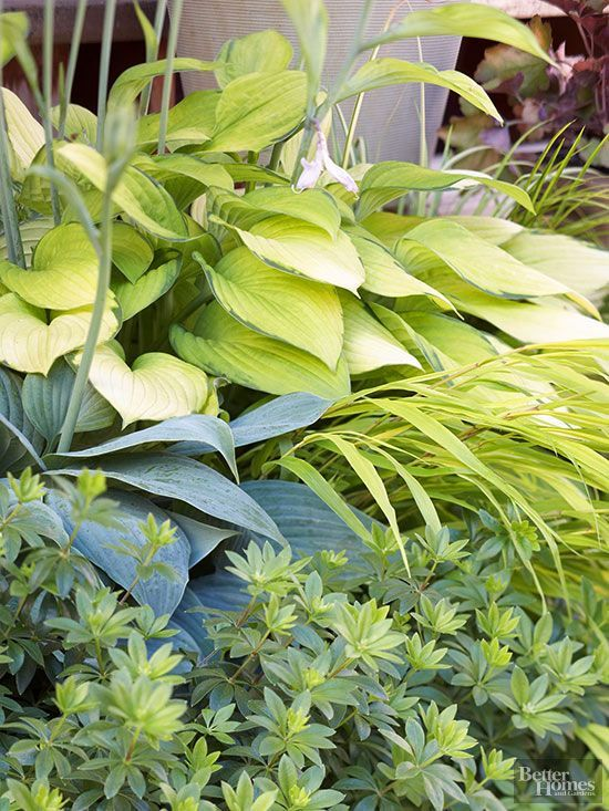 430 best hostas and companion plants images on pinterest