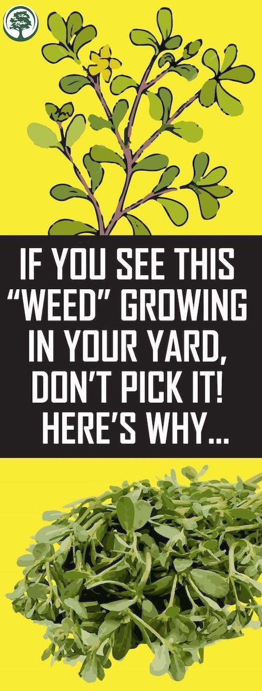 """If You See This """"Weed"""" Rising In Your Yard, Don't Decide It! Right here's Why…"""
