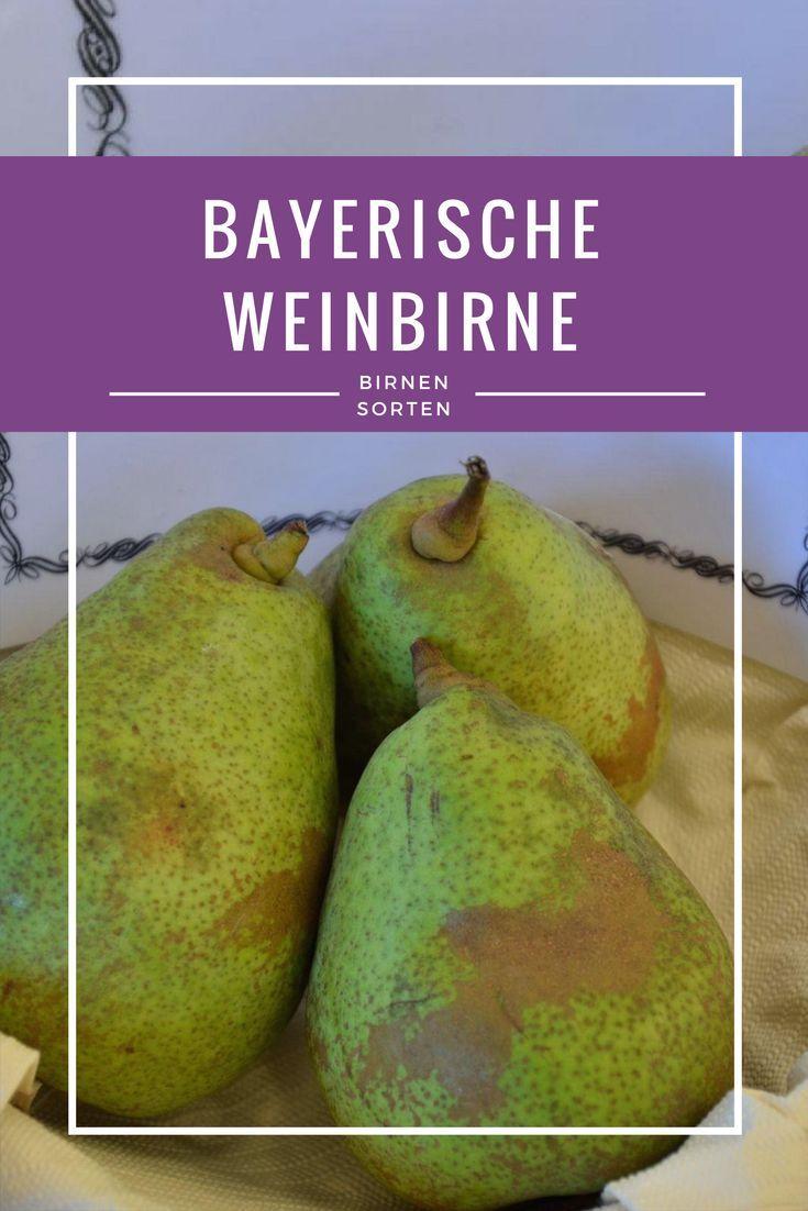 Birne: Bayerische Weinbirne. Durch das sehr saftiges Fruchtfleisch mit einem ausgezeichneten süßen und doch herben Aroma ist diese Birnensorte ideal als Mostbirne zu verarbeiten.