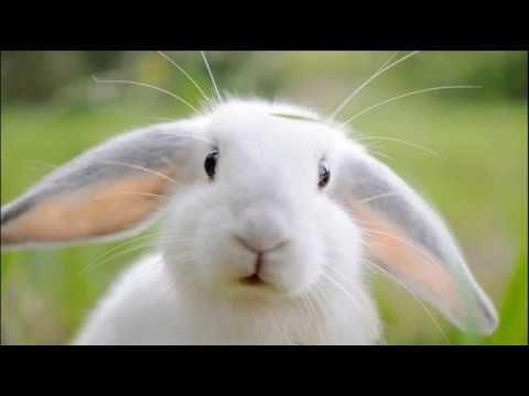 Rabbit Quotes,Quotes by Topics.