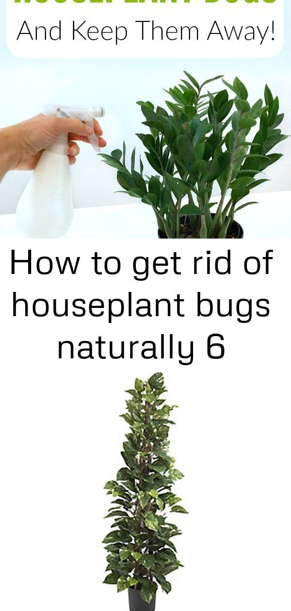 How To Get Rid Of Houseplant Bugs Naturally 6 Plant Pests Plant Bugs House Plants