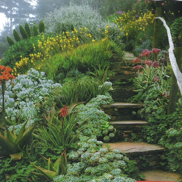 gorgeous stairway and rail with succulents (portegese site: suculentasminhas.blogspot)