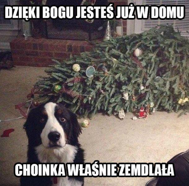Boże Narodzenie z psem