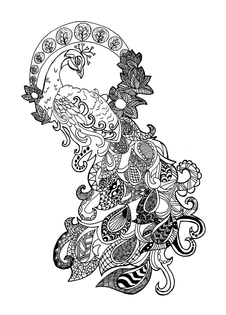 An Amazing Peacock Really Zentangle And Hard From The Gallery Adult Colouring PagesAdult