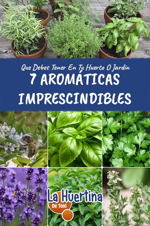 7 Aromáticas Imprescindibles En El Huerto Urbano O Jardín La Huertina De Toni Huerta En Macetas Huerto Urbano Macetas Plantas Aromaticas