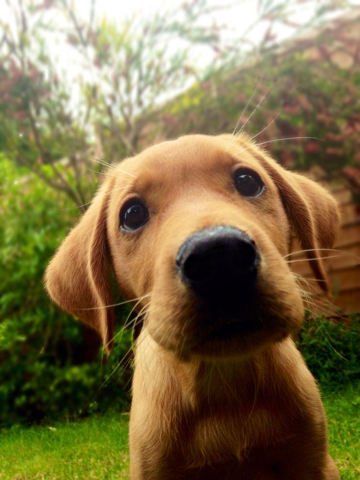 cannot wait to get our housey and a little puppy