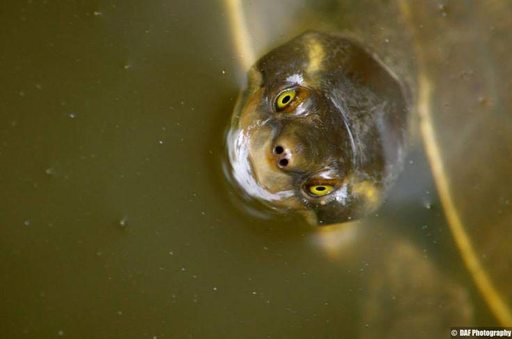 Cheeky Turtle