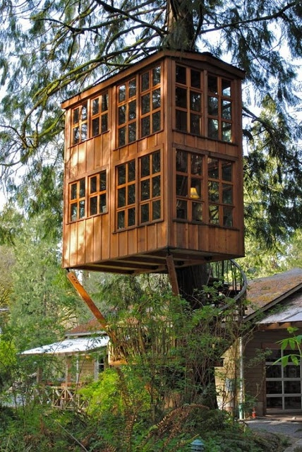 LOTS of windows, and a staircase that winds down around the trunk of the tree to another small deck before proceeding down to the ground.