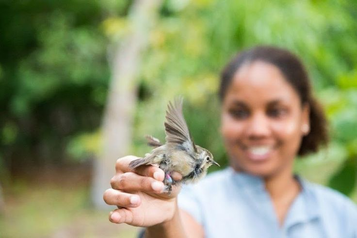 Wilderness Collection is thrilled to announce the results of a recent census showing that the #seychelles  White-Eye population on #NorthIsland  has increased almost fourfold since the reintroduction of this rare species!