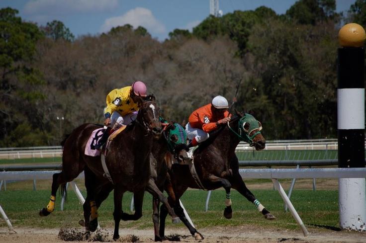 Live Racing at Tampa Bay Downs! Sport of kings, Horses