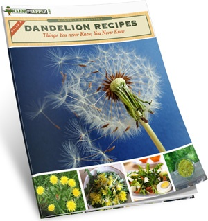 """Free book of Dandelion Recipes by """"Major Prepper"""" - just in case I need to find it again"""