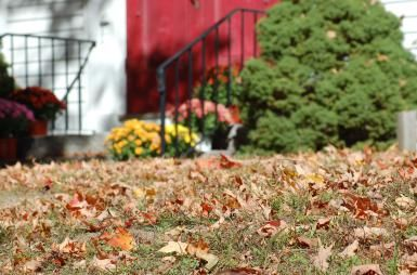 Don't Let Your Lawn Fall Out of Shape in Autumn: Timely leaf-raking is a central part of autumn lawn care.