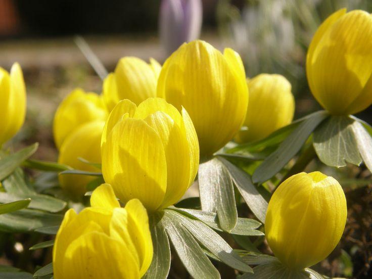 Flowers of sunshine...