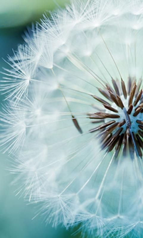 17 Best Dandelion Quotes On Pinterest Perfection Quotes