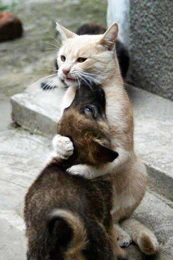 Cats Fur Smells Like Poop