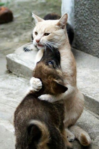 Ok! Ok! Me too, I love you!
