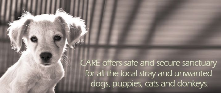 Support CARE Corfu that take care of strays in Greece! Follow us on twitter @5stargreece