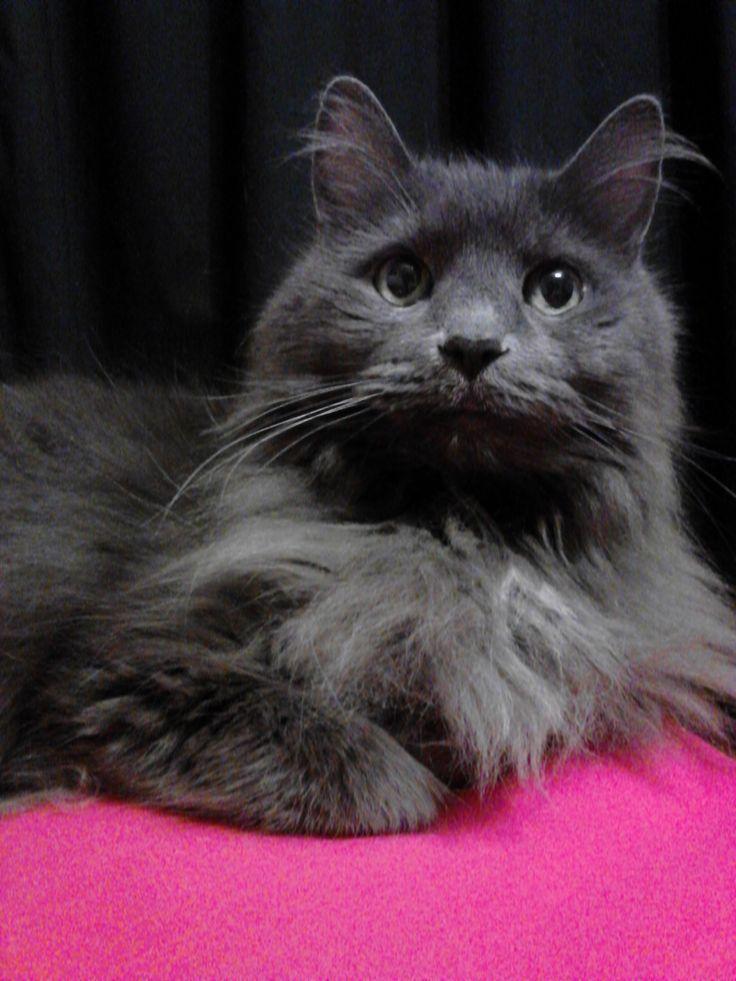 cat crosses paws