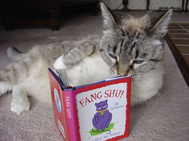 Image Result For Gambar Kucing British Shorthair Yang Lucu Baca Buku Cat Reading Cats Cat Books
