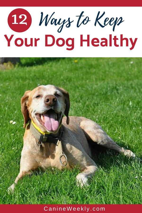 12 Basic Ways To Keep Your Dog Healthy By Following These Rules You Can Drastically Reduce The Chances Of Falling Ill Or Suffering A