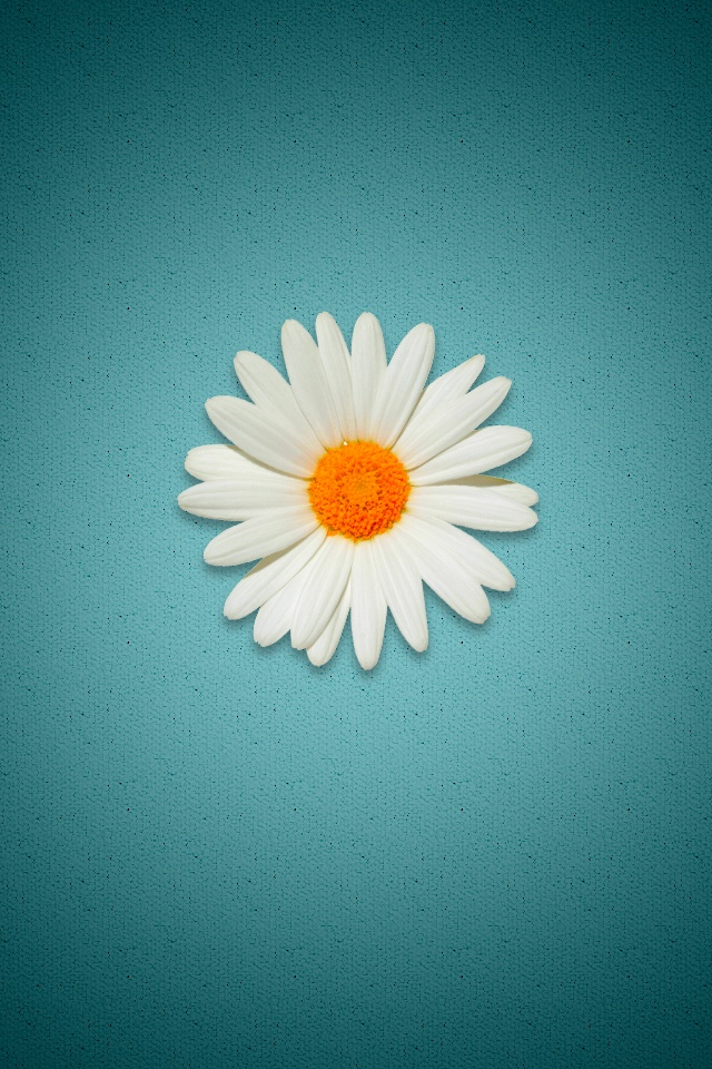 daisy iphone wallpaper 10 best images about wallpapers on palm trees 9180
