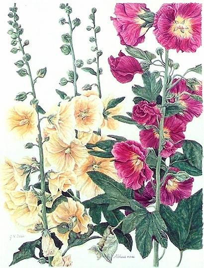 Janice Neill Dean | American Society of Botanical Artists