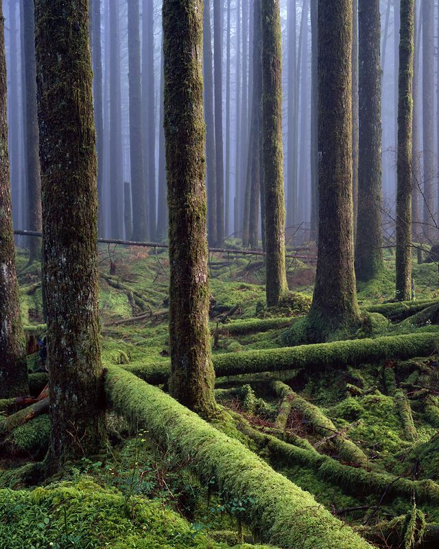 Forest in British Columbia, Canada. By Adam Gibson.