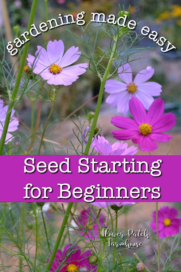 How To Start Seeds For A Beautiful Garden Gardening For