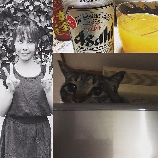 娘の誕生日の今日は、焼肉に☆久しぶりのビール美味し~🍻☆カンパーイ☆おめでとう☆ ラムちゃん冷蔵庫の上で、グッタリ(笑)🐱暑いからね☆ #愛猫#らむ#さばとら #ねこ #ねこすき #ねこすた #にゃんこ  #にゃんすたぐらむ #にゃんず  #愛猫家#ねこのいる生活  #ねこのきもち #ねこのいる暮らし  #ねこすきさんと繋がりたい  #明日も笑顔と優しい気持ちで #毎日暑いけどがんばりましょ  #ビールうまい