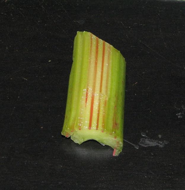 experimento para ver como las plantas absorben el agua con apio.How Plants absorb Water: Celery Science Experiment