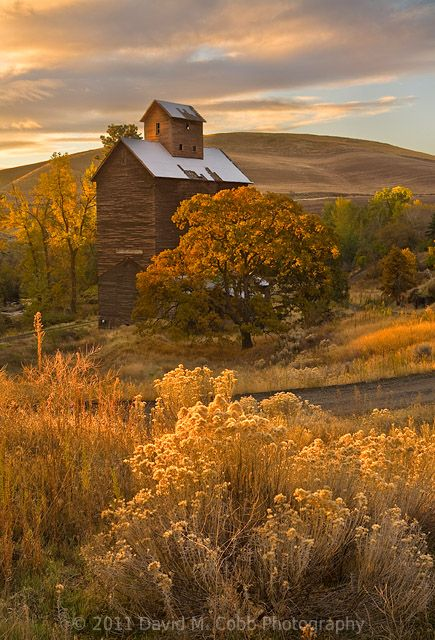 Burnished shades of Autumn's surrender to the cold...