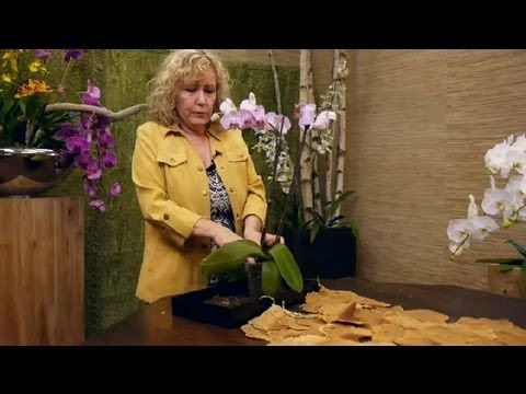 Problems With Orchid Care : Orchid Care - Orchid Plant Guide