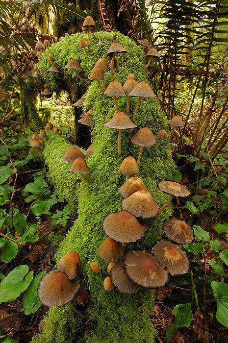 Mushroom Colony On Log Print By Deborah Ketelsen                                                                                                                                                                                 More