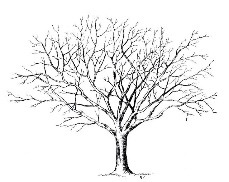 Malvorlage Baum Ohne Blatter Baum Blatter Cherryblossom Malvorlage Ohne Tree Drawing Tree Graphic Tree Sketches
