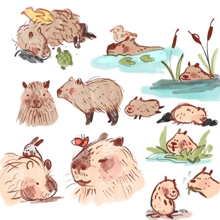 """lily on Twitter: """"capybara, world's largest rodent and even bigger friend… """""""