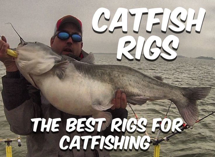 Everything you ever needed to know about catfish rigs and then some can be found here!