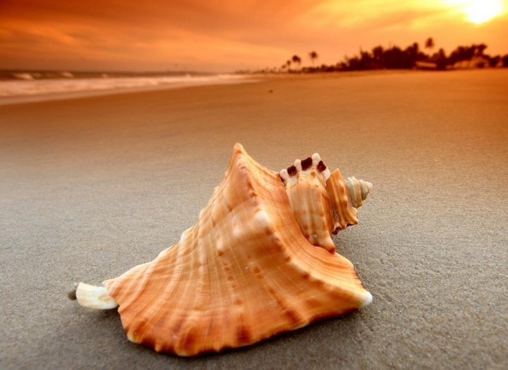 53 best SeaShells images on Pinterest Decoration Earthenware