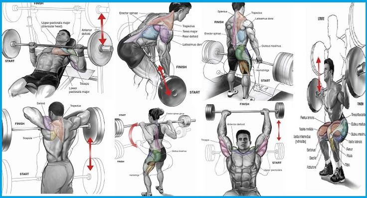 Best Exercise to Gain Muscle - The 7 Top Exercises
