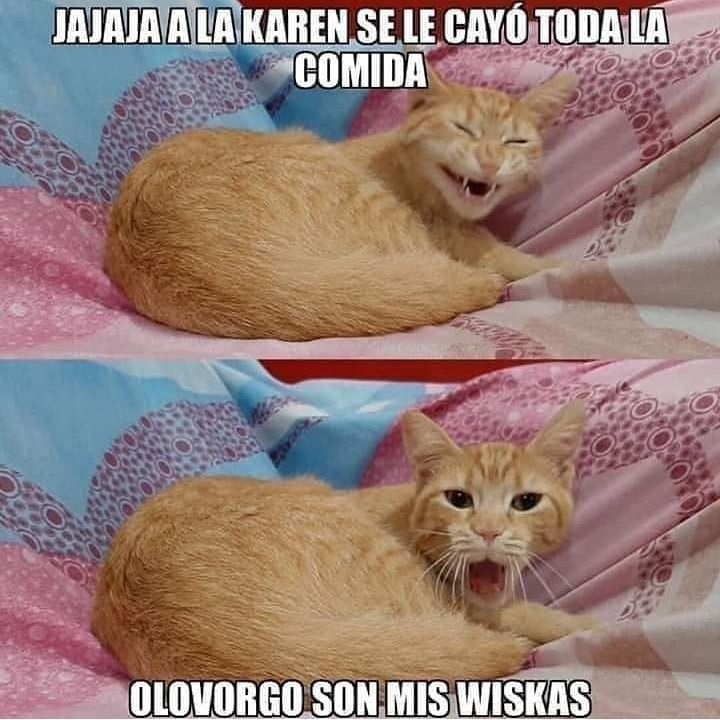 Karen Y Michi Parte 3 Memes Graciosos De Animales Memes Memes De Animales Divertidos
