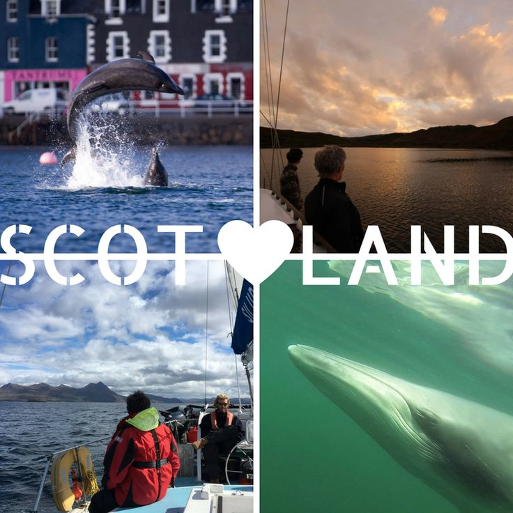 2 LAST-MINUTE spots available at our Whale & Dolphin Conservation project in the Hebrides from 5-13th June! Let us know if you are interested on our website!