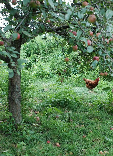 I'm totally picturing having a humble orchard growing at my dream home.  // Swede Cottage Farm <3 this //