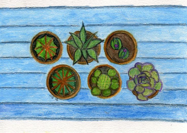 Mesa con cactus y plantas crasas.