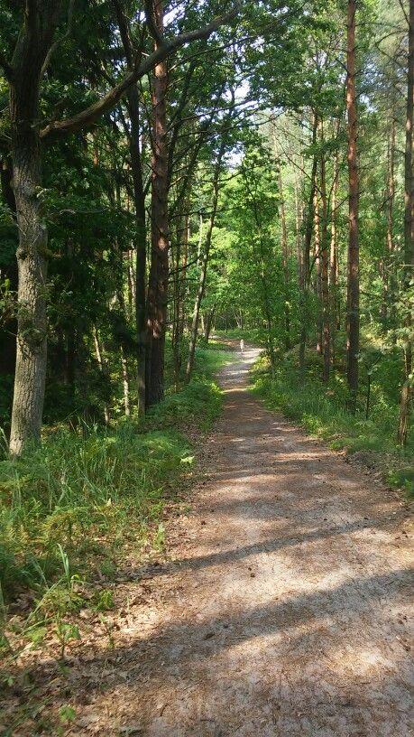 Piękny las i takie świerze powietsze