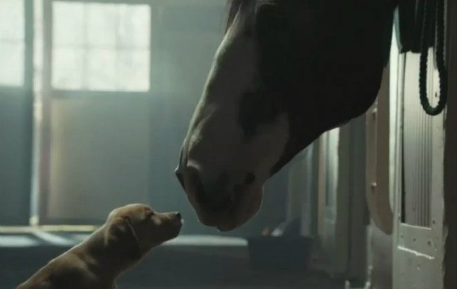 Super Bowl Budweiser Puppy Ad