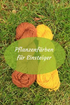 Wolle mit Pflanzen färben für Einsteiger