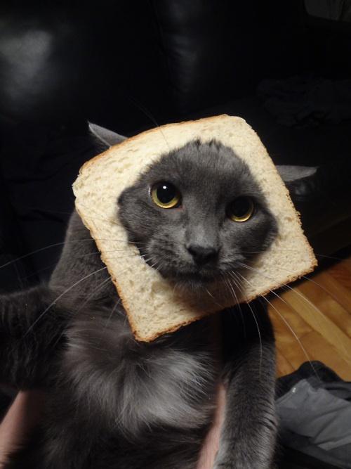 www.breadedcats.com/