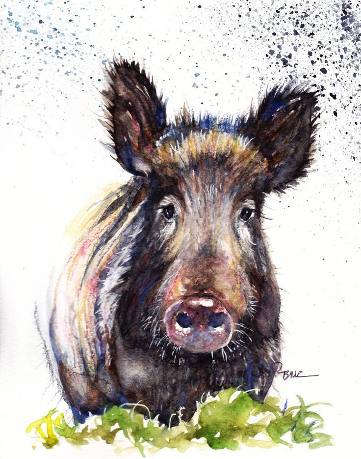 Original Watercolour Painting by Be Coventry,Animals,Realism, Wild Boar