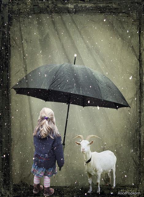 Come Under My Umbrella - Cornelia Kopp  ⓒ