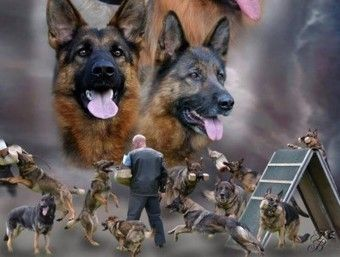 Dog Security Services Solutions based on Security Guard Dog and Mobile Security patrols safety measure with trained Security Guard and Mobile patrols security